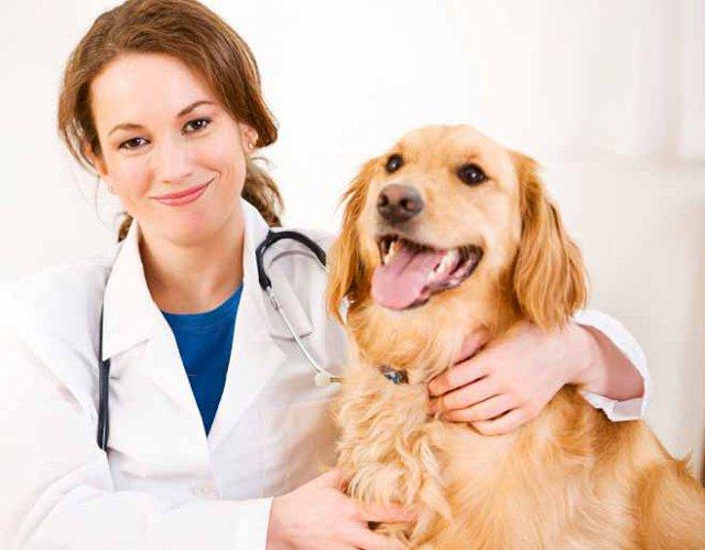 en caso de duda ll valo al veterinario perro obediente