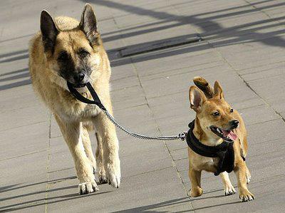 a6eb8bde19-pasear-al-perro