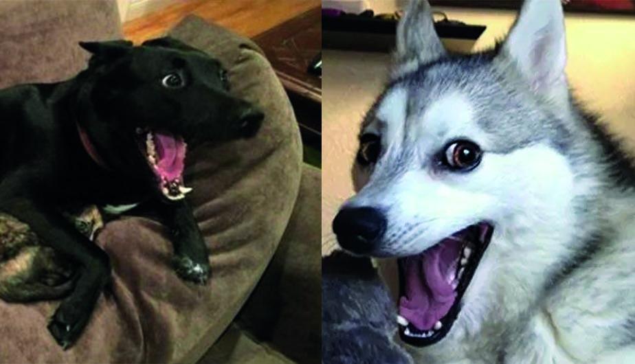 Le gusta de perrito a mi vecina - 4 4